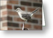 Mocking Greeting Cards - The Mocking Bird Greeting Card by Rick Friedle