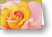 Roses Petals Greeting Cards - The Rose Greeting Card by Myung-Bo Sim