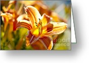 Stripes Greeting Cards - Tiger lily flower Greeting Card by Elena Elisseeva