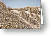 Dune Grass Greeting Cards - Tranquility Greeting Card by Bonnie Bruno