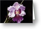 Photorealism Pastels Greeting Cards - Translucent Orchid Greeting Card by Nanybel Salazar