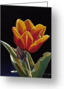 Photorealism Pastels Greeting Cards - Translucent Tulip Greeting Card by Nanybel Salazar