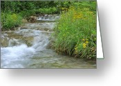 Oklahoma Landscape Greeting Cards - Travertine Creek in the Morning Greeting Card by Iris Greenwell