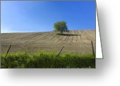 Tree Lines Greeting Cards - Tree  Greeting Card by Bernard Jaubert