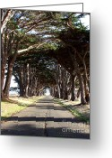 Outdoor Canopy Greeting Cards - Tree Canopy Promenade Road Drive . 7D9959 Greeting Card by Wingsdomain Art and Photography