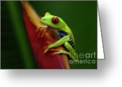 Tree Creature Greeting Cards - Tree Frog 19 Greeting Card by Bob Christopher