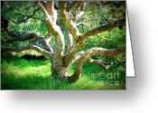 Golden Gate Park Greeting Cards - Tree in Golden Gate Park Greeting Card by Carol Groenen