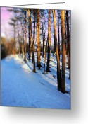 Snow Posters Greeting Cards - Trees Photography Greeting Card by Mark Ashkenazi