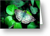 Marking Photo Greeting Cards - Tropical Checkered Skipper Greeting Card by Thomas R Fletcher