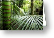 Exotic Flora Greeting Cards - Tropical jungle Greeting Card by Les Cunliffe