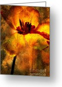 Flower Works Greeting Cards - Tulip Greeting Card by Bernard Jaubert
