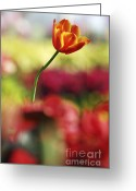 Patty Malajak Greeting Cards - Tulip Greeting Card by Patty Malajak