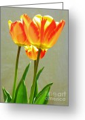 Tulip Art Botanical Art Mixed Media Greeting Cards - Tulips - Seasonal Garden Flowers Greeting Card by Photography Moments - Sandi