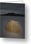 Desolate Landscapes Greeting Cards - Tumbleweed On The Bonneville Salt Greeting Card by John Burcham