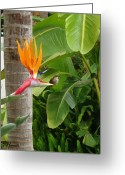 Bird Of Paradise Greeting Cards - Two Birds Greeting Card by Ellen Henneke