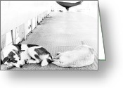 Dirty Dog Greeting Cards - Two sleeping homeless dogs Greeting Card by Pongsak Deethongngam