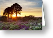 New Britain Greeting Cards - Two trees in the New Forest at sunset Greeting Card by Richard Thomas