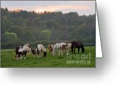 Wild Horses Greeting Cards - Under The Setting Sun Greeting Card by Angel  Tarantella