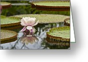 Water Bloom Greeting Cards - Victoria II Greeting Card by Heiko Koehrer-Wagner