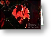 Autumn In The Country Photo Greeting Cards - Vineyard 33 Greeting Card by Xueling Zou