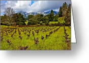 Mountain Vineyards Greeting Cards - Vineyards and Mt St. Helena Greeting Card by Garry Gay