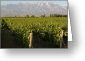 Andes Greeting Cards - Vineyards In The Mendoza Valley Greeting Card by Michael S. Lewis