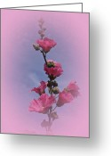 Hollyhock Greeting Cards - Vintage Hollyhock Greeting Card by Richard Cummings