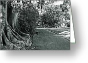 Fig Tree Greeting Cards - Walk in the Park Greeting Card by Douglas Barnard