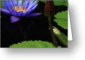 Conservatory Photo Greeting Cards - Water Lily Greeting Card by Cynthia Dickinson