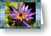 Close-up Photos Greeting Cards - Water Star Greeting Card by Bell And Todd