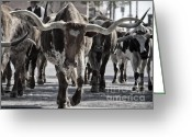 Cowboys Greeting Cards - Watercolor Longhorns Greeting Card by Joan Carroll