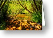 Shady Greeting Cards - Waters Edge Greeting Card by Cheryl Young