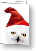Xmas Greeting Cards - Whatever Greeting Card by Photodream Art
