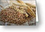 Grains Greeting Cards - Wheat ears and grain Greeting Card by Elena Elisseeva