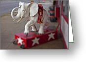 Elephant Ride Greeting Cards - White Elephant Greeting Card by Garry Gay