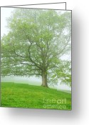 Appalachian Mountains Greeting Cards - White Oak Tree in Fog Greeting Card by Thomas R Fletcher