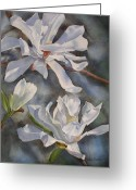 Star Magnolias Greeting Cards - White Star Magnolia Blossoms Greeting Card by Sharon Freeman