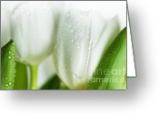 Dew Drop Greeting Cards - White Tulips Greeting Card by Nailia Schwarz