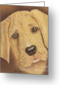 Dawn Jones Greeting Cards - Why So Sad  Greeting Card by Dawn Jones