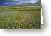 Cornfield Greeting Cards - Wildflower Fields Greeting Card by Bob Gibbons