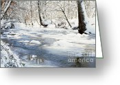 Virginia Winter Greeting Cards - Winter Prince William Forest National Park Greeting Card by Thomas R Fletcher