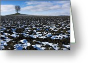 Horizon Over Land Greeting Cards - Winter tree. Greeting Card by Bernard Jaubert