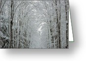 Christine Hafeman Greeting Cards - Winter Wonderland Greeting Card by Christine Hafeman