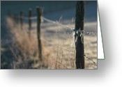 Barbed Wire Greeting Cards - Wooden posts Greeting Card by Bernard Jaubert