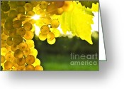 Green Vines Greeting Cards - Yellow grapes Greeting Card by Elena Elisseeva