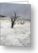 Winter Road Greeting Cards - Yellowstone Mammoth hot springs Greeting Card by Pierre Leclerc