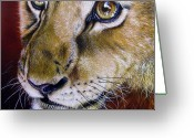 African Cats Greeting Cards - Young Lion Greeting Card by Jurek Zamoyski
