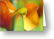 2012 Flower Calendar Greeting Cards - Zantedeschia Greeting Card by Juergen Roth