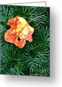 Indiana Autumn Greeting Cards - Autumn Foliage Greeting Card by Jack  R Brock