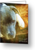 Lazy Dogs Greeting Cards - Lazy Afternoon Greeting Card by Angel  Tarantella